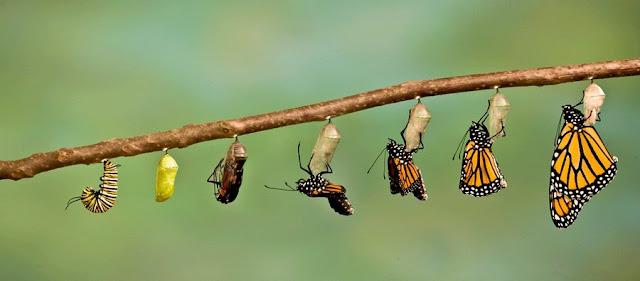 التغيير و دوره في تحسين حياة الفرد