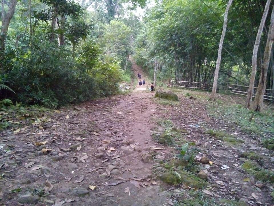 Kawasan hutan kajang