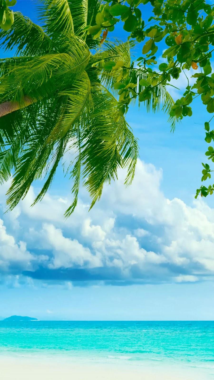 Wallpaper Android Pohon Kelapa Di Pulau Tropis