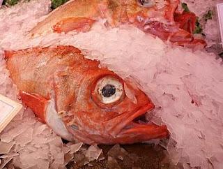 Ciri Ciri Ikan yang Mengandung Formalin. bahaya formalin, ikan terkena formalin, cara mengenali ikan formalin