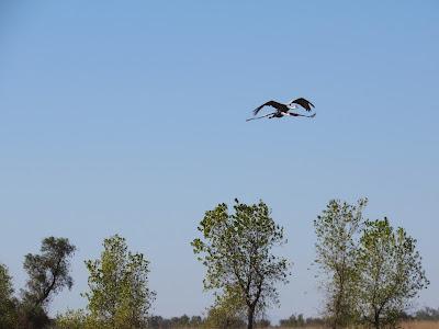 Llano Seco California