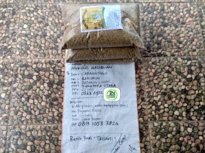 Benih pesana    MUKHLIS HASIBUAN Padang Lawas, Sumut   (Sebelum Packing)