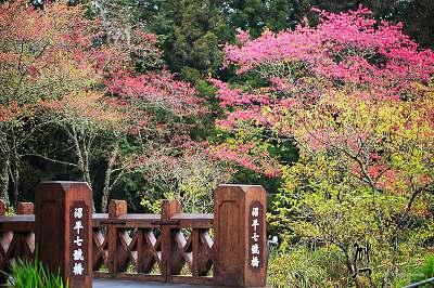 台灣賞櫻花景點-秘境資訊