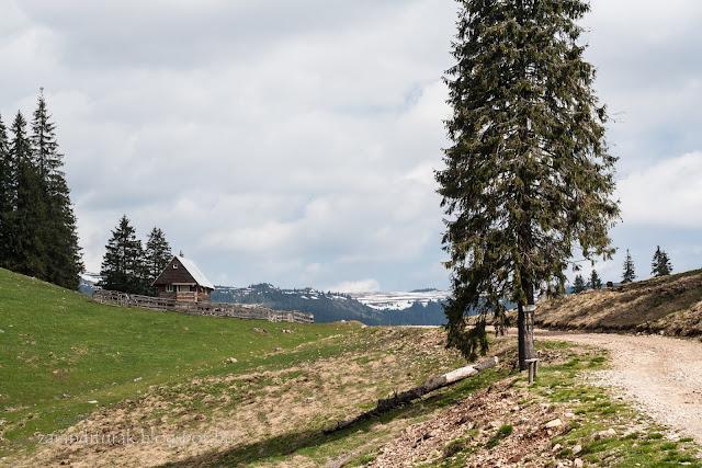 távoli havas hegygerinc Pádison előtérben fenyővel