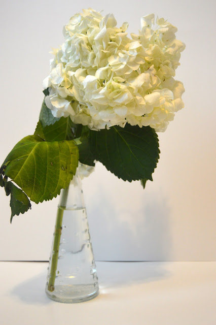 white hydrangea, flowers, birthday eve, vase