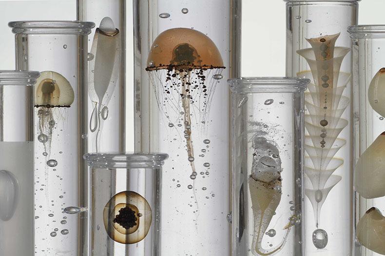 Exquisitos especímenes de crustáceos imaginados en vidrio por Steffen Presa