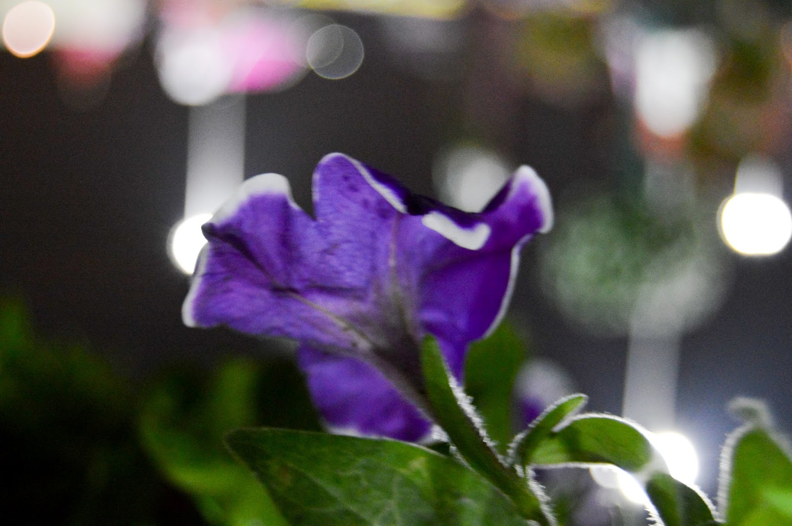 Purple Flower Free Wallpapers & Stock Photos