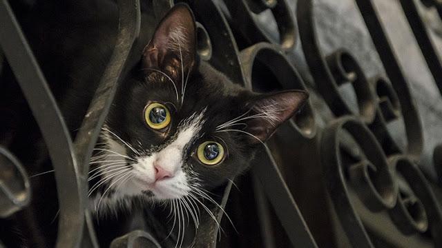 """Matanza de animales en Francia: un """"asesino en serie"""" envenena a más de 200 gatos"""