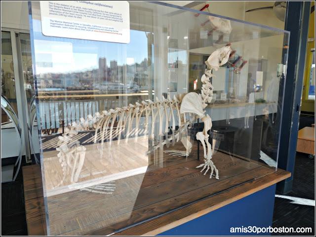 Sea Lion Center del Pier 39