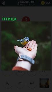 На женской вытянутой руке стоит маленькая птица и клюет зерна
