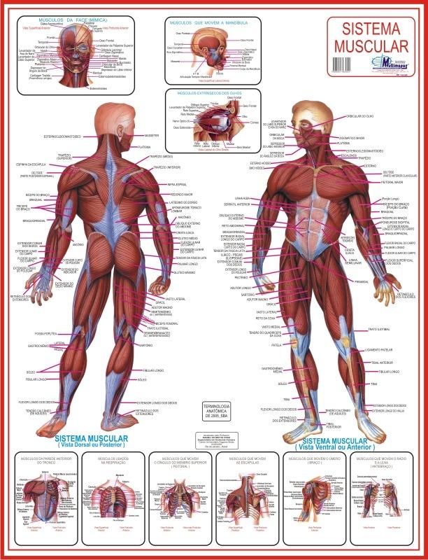 Estudo da Anatomia Humana
