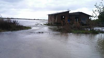 ΗΛΕΙΑ: Πνίγηκαν ζώα στον κάμπο - Πλημμύρισαν κτηνοτροφικές εγκαταστάσεις