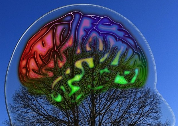 Buongiornolink - Operato al cervello per un tumore mentre suona il clarinetto