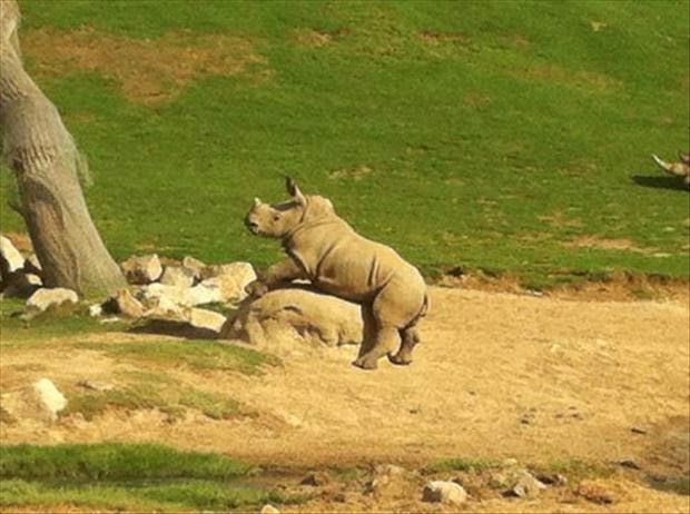 Funny Rhino Rock Sex Fail Joke Picture