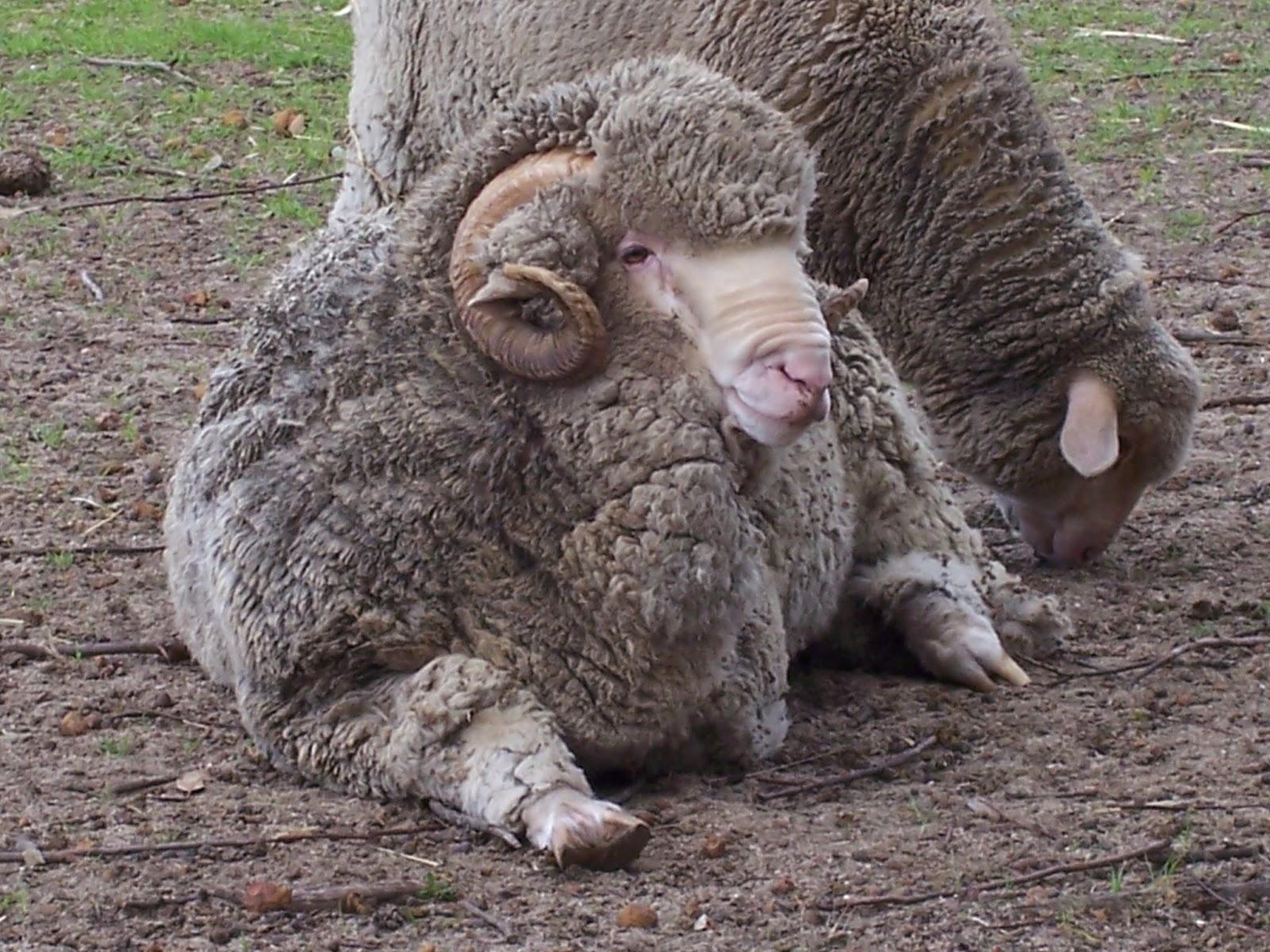 Pretending to Farm: The Art of Raising Orphaned Lambs