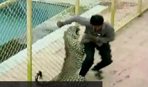Leopard Mauled Six As It Strolls Into Indian School (Photos)