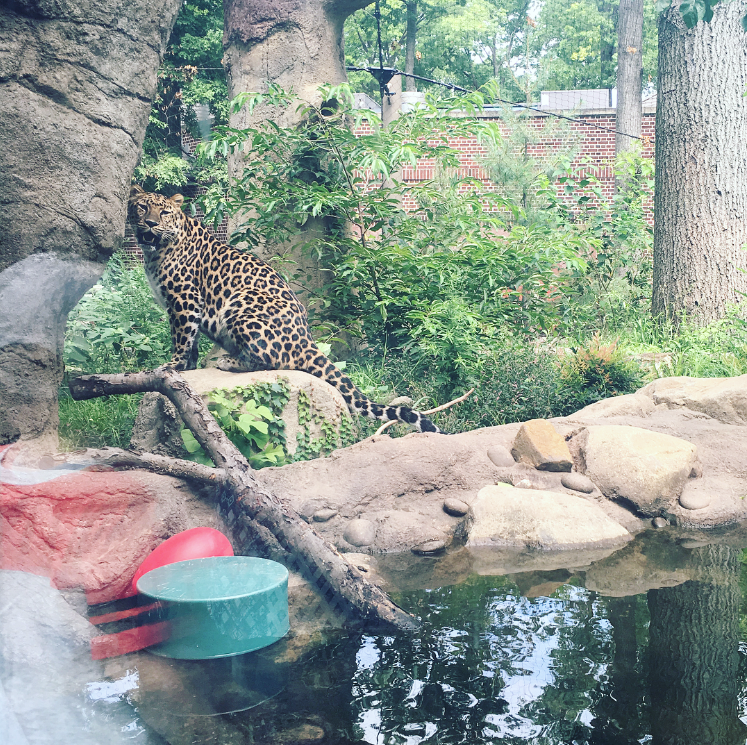 Staten Island Zoo Places to Visit with Kids in NYC