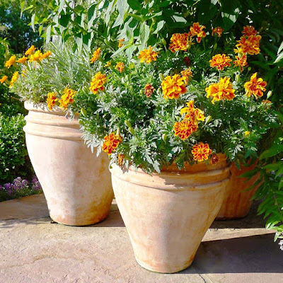 Kinds of Flowers for Pots in Tiny Sizes