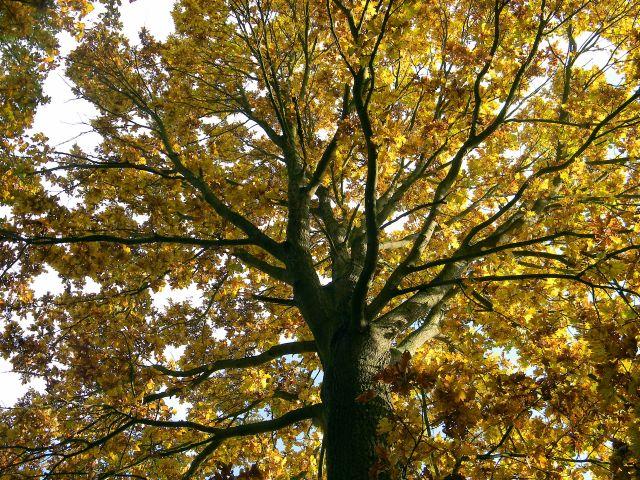 drzewa, las, pola, jesień
