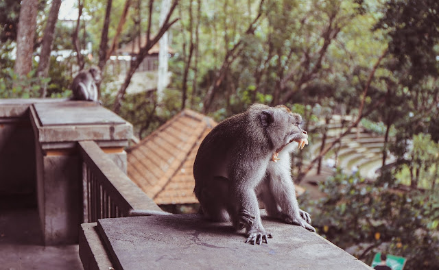 Ubud apinametsä