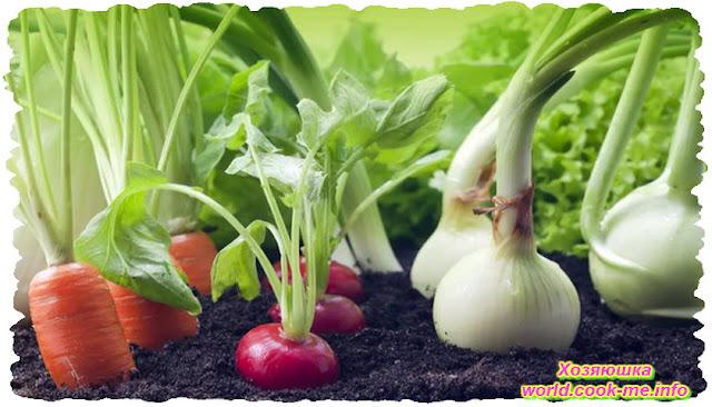 Посев овощей под зиму. Советы проверенные временем...