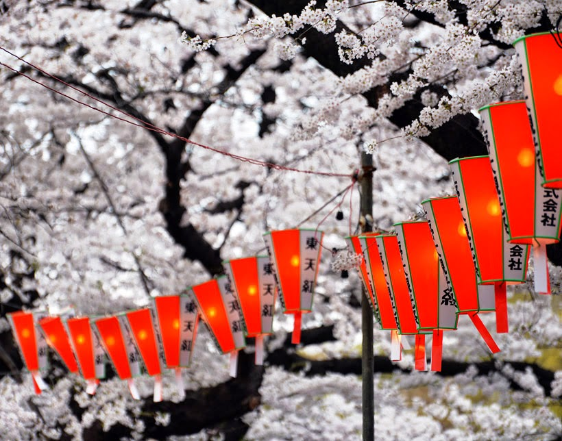 Hanami or cherry blossom time in Japan