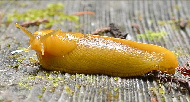Sluggity Slug Slug