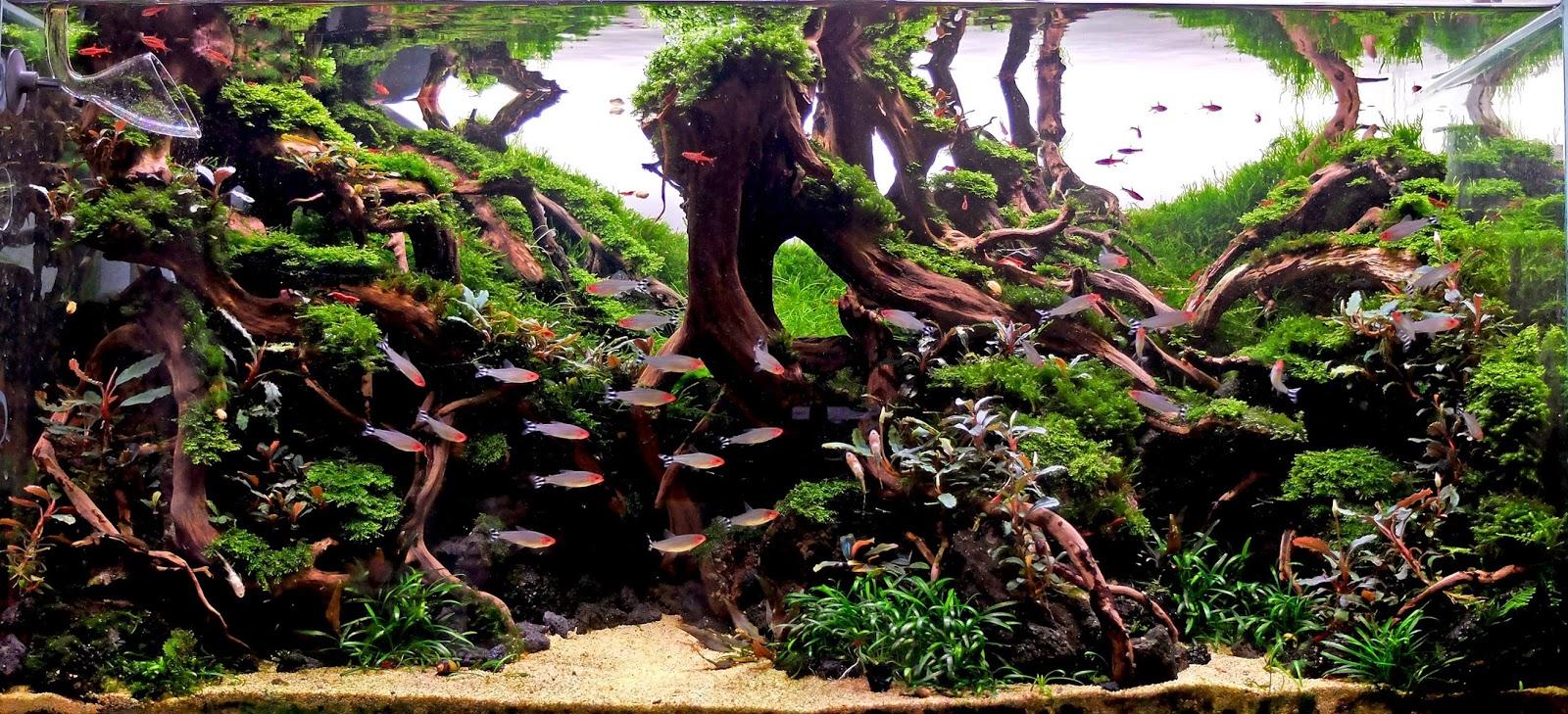 The Diorama Aquascape