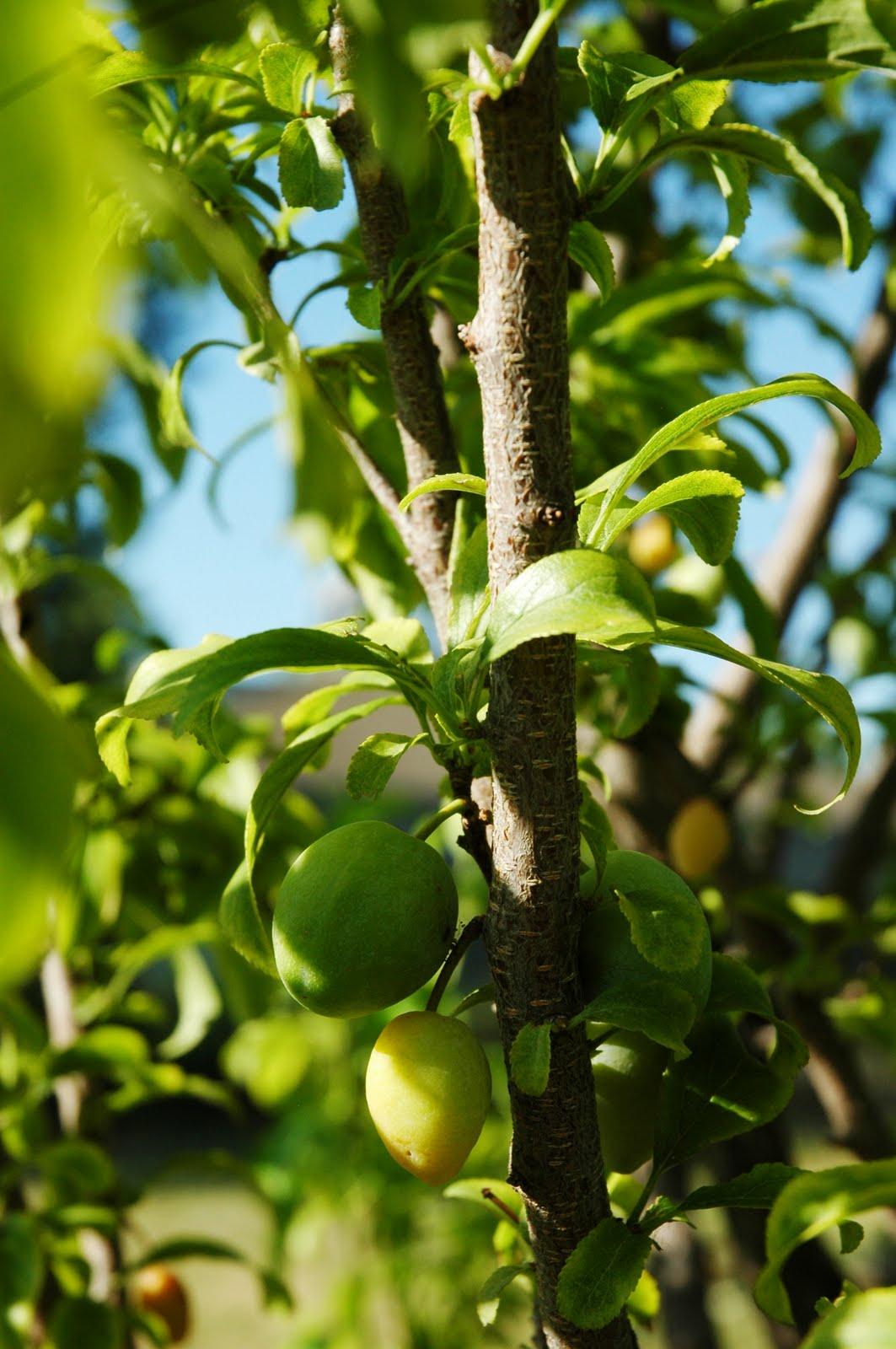 Fruit Cocktail Tree 118