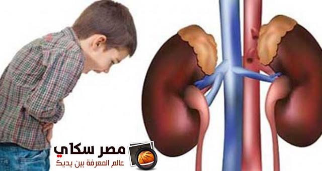 أسباب أمراض الكلي وأهم وظائفها Kidney disease
