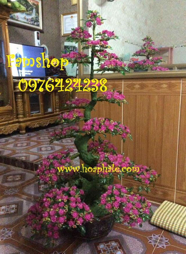 Goc bonsai cay hoa dao tai Bo De