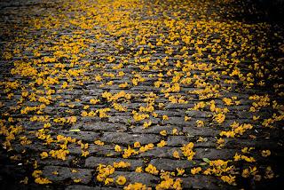 Resultado de imagen para lluvia de flores cien años de soledad
