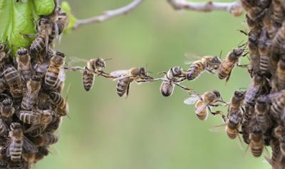 Η υγεία μας συνδέεται με την υγεία των… μελισσών! Τι έδειξε μεγάλη έρευνα μέλισσες