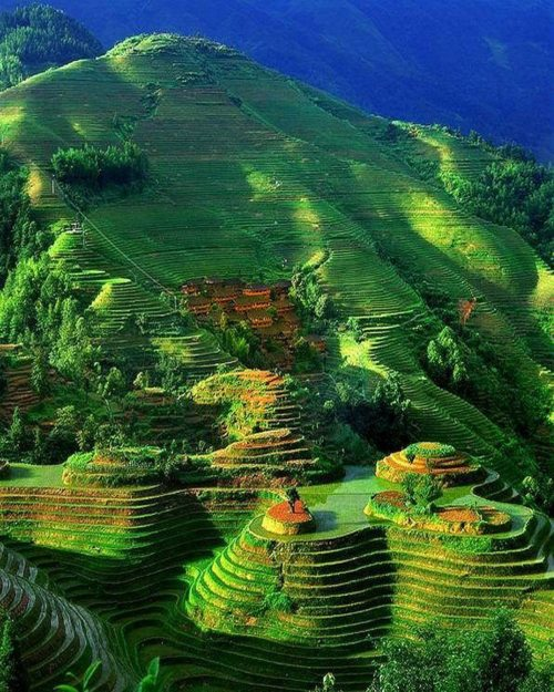 建築模型のコンタよりコンタな地形?世界にある美しい棚田3つ 元陽の棚田 中国