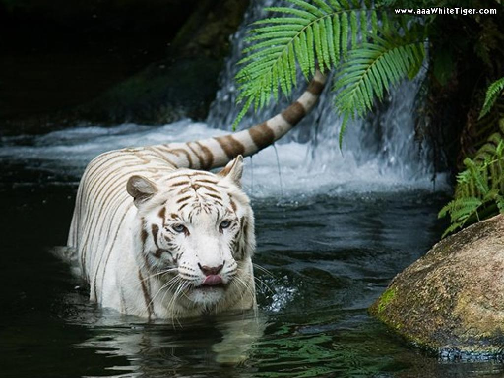 Cool animal wallpaper |Nature Wallpapers