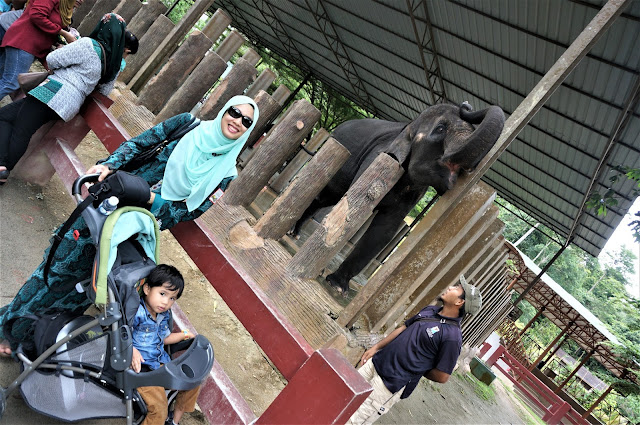 National Elephant Conservation Centre,Kuala Gandah: The Place For Rescued Orphaned Baby Elephants