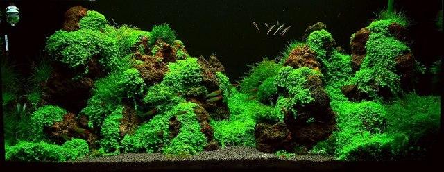 bể thủy sinh hoàn chỉnh với đá nham thạch