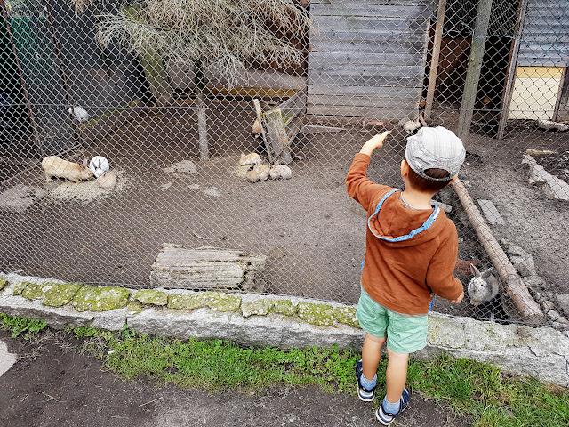 Zoo Farma Łączna