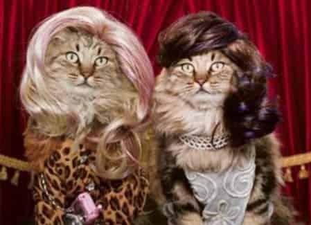 Typo Haircuts jadi Haircats
