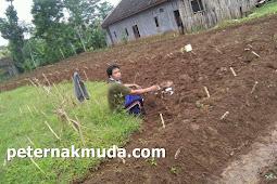 Indonesia Sangat membutuhkan tanah yang sehat