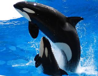 hewan terpintar dan tercerdas di dunia - paus
