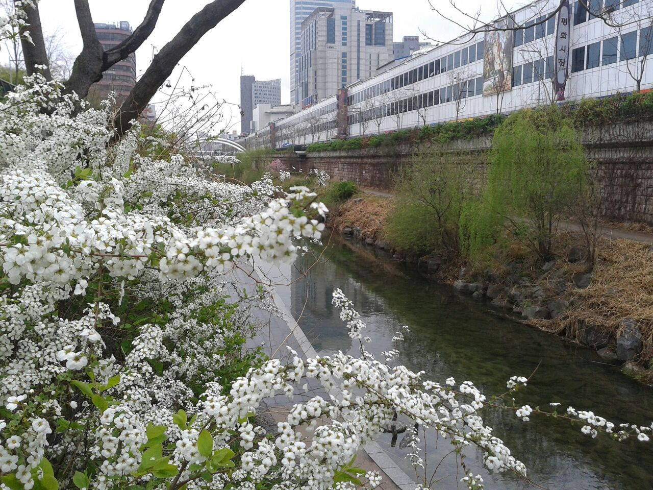 bercuti di Korea Selatan musim bunga