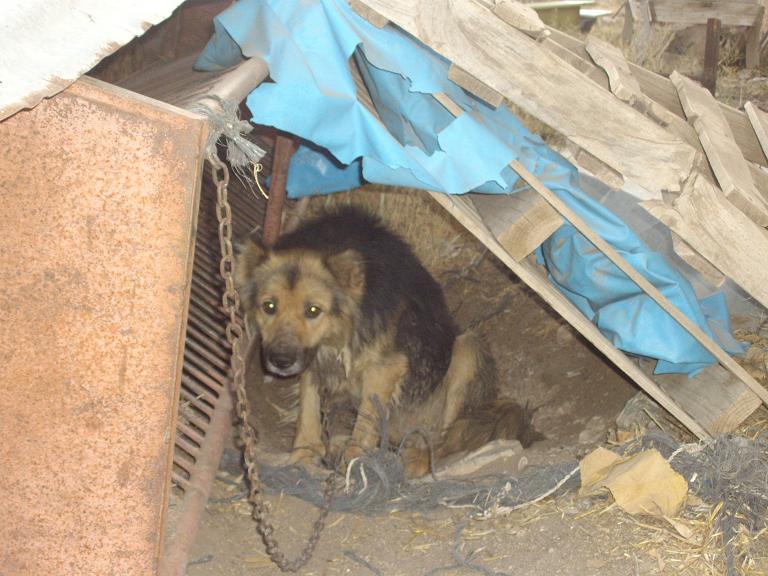 Mi perro ha muerto yahoo dating