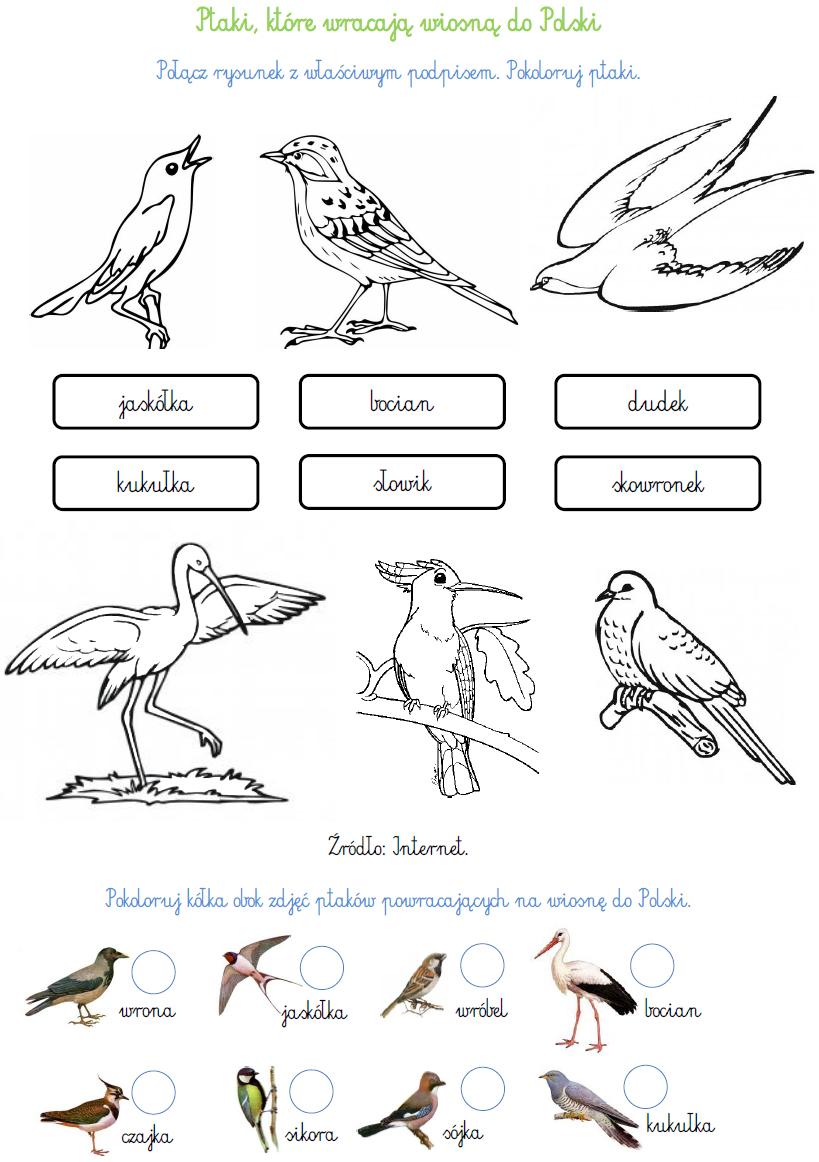 Blog Edukacyjny Dla Dzieci Ptaki Które Wracają Wiosną Do Polski