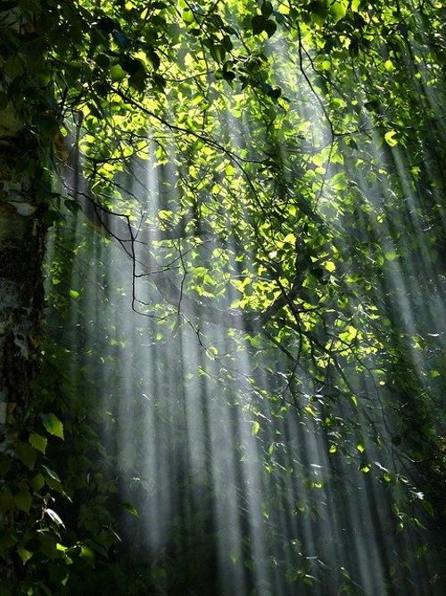 Raios de luz em meio a paisagem. #PraCegoVer