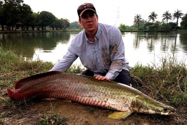 Menteri Susi Beberkan Fakta Ikan Araipama yang Sempat Viral
