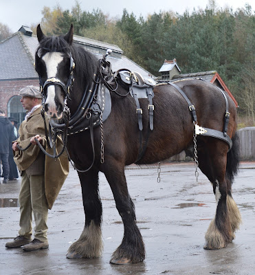 A Bus Trip to the Horses at War Event at Beamish - Shire Horse at the Colliery
