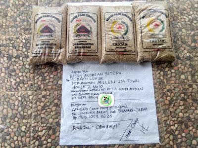 Benih Padi Pesanan    RICKY ANDREAN Medan, Sumut.    Benih Sebelum di Packing.