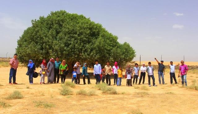 Mendapat Julukan 'The Only Living Sahabi', Pohon Ini Pernah Menaungi Rosulullah SAW