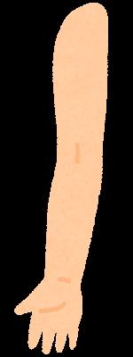 腕のイラスト(内側)